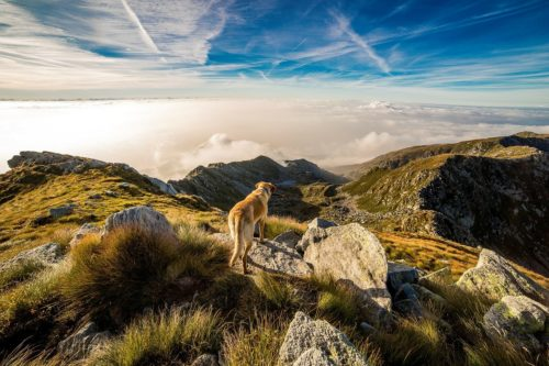 Dog hiking in the mountains up by the clouds