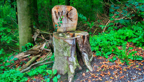 Tree stump toilet out in the woods
