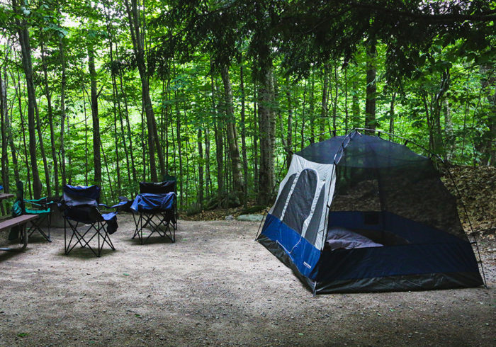 Pop up screen tent set up in a forest