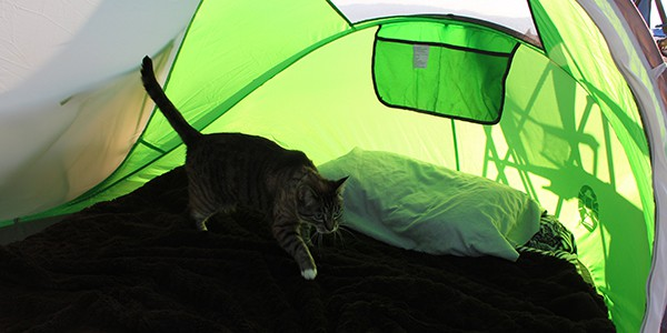 The Coleman 2 person pop-up tent is perfect for one person and a cat.