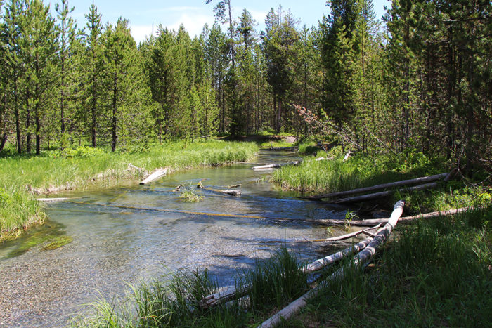 Lucky Dog Creek which flows through the Fish Creek Road Campground in Idaho.