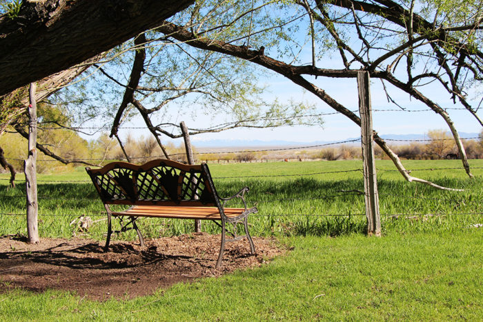 Bench that faces pasture that had cows and horses in it when we were there.