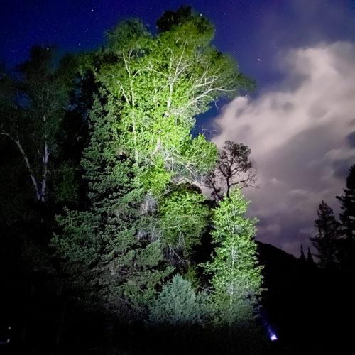 Vont Spark headlamp illuminating a large tree at night.