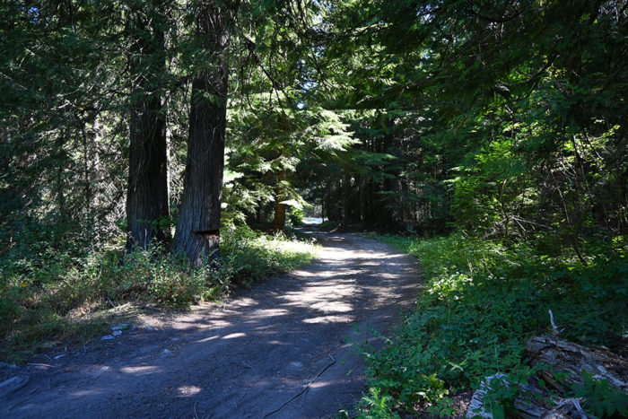 Narrow road leading to our campsite at Lightning Creek Road.