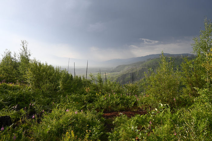 View from our trailer door (McGinnis Creek, Montana).