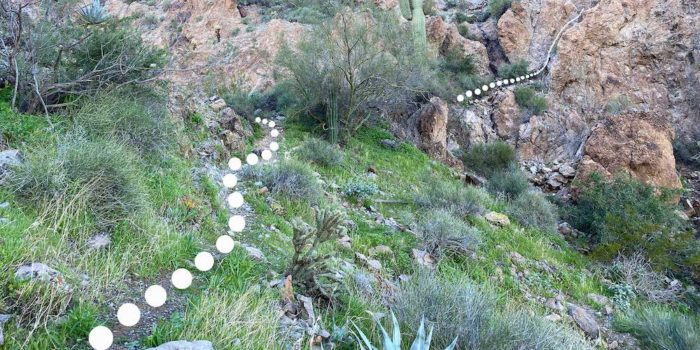Part of the Saddle Mountain Peak trail near the Saddle Mountain free camping area.