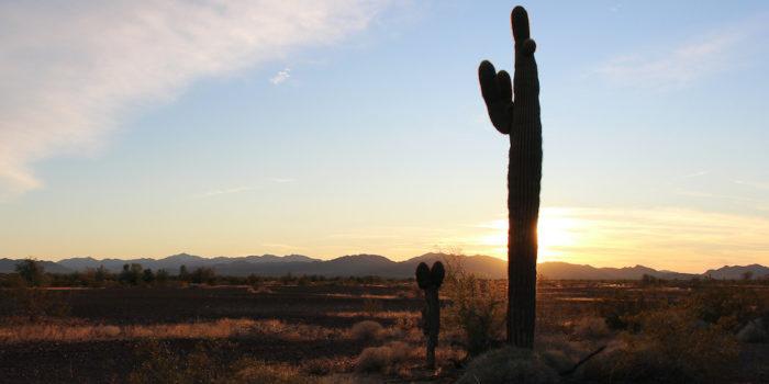 Saguaro cactus Plomosa Road Quartzsite Arizona.